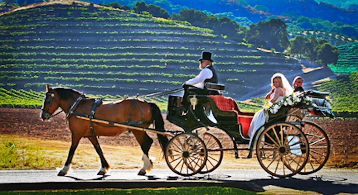 Carriage Ride Vineyard